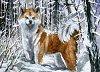 KAKAO No. 290 - Yuki im Schnee [vergeben]