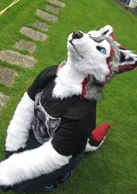Cosplay-Cover: Fin (Husky/Wolf mix)