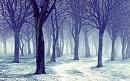 Cover: Fallender Schnee