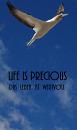 Cover: Life is precious