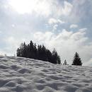 Cover: La tigre e la neve