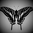 Cover: Schwarzer Schmetterling