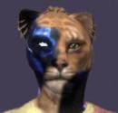 Cover: Krumme Katzen