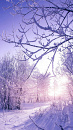 Cover: Winterwunderland