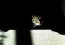 Cover: Das ist MEINE Katze!