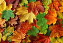 Cover: Herbstlaub
