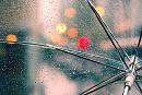 Cover: Umbrella