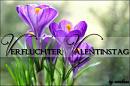 Cover: Verfluchter Valentinstag