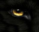 Cover: Der Schwur des Wolfes