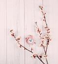 Cover: Eine Kirschblüte reist durch die Zeit