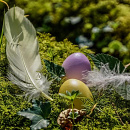 Cover: Wenn die Natur zu Ostern flüstert