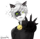 Cover: Schwarze Katzen weinen nicht