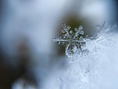 Cover: Schnee? - Oh ja! Schnee!!