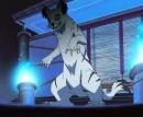 Cover: Naruto Katzen