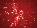 Cover: Shards of Red
