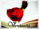 Cover: Verwünscht