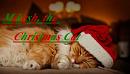 Cover: Mikesh, der Weihnachtskater