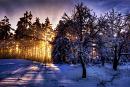 Cover: Schneelandschaft