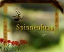 Cover: Spinnenkuss