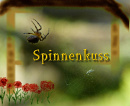 Cover: Spinnenkuss
