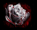 Cover: Bloody Rose
