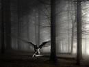 Cover: Von La Sadie's zu Dir en Grey- Ein steiniger Weg