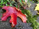 Cover: Herbstmädchen