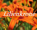 Cover: Lilienkrone
