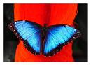 Cover: Wie aus einer Raupe ein Schmetterling wird
