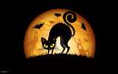 Cover: Von Katzen und Fledermäusen