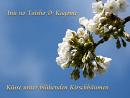 Cover: 🌸 Küsse unter blühenden Kirschbäumen 🌸
