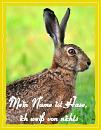 Cover: Mein Name ist Hase, ich weiß von nichts!