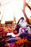 Top-3-Foto - von Taru-chan