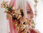 Cosplay-Cover: Sakura Miku