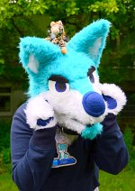 Cosplay-Cover: Finn the blue Husky